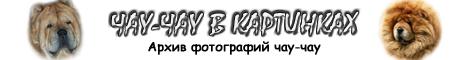 Чау-чау в картинках - архив фотографий чау-чау